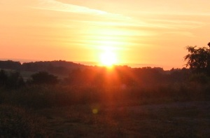Sunrise 2012n crop 1