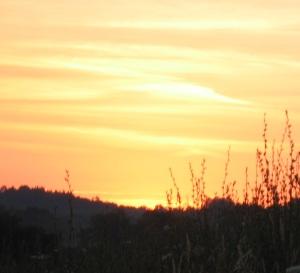 crop a Sunrise Dan's farm 2012d